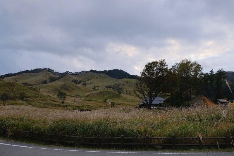 砥峰高原 ススキ