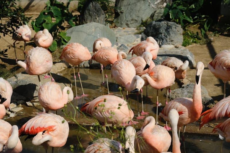 姫路市立動物園 フラミンゴ