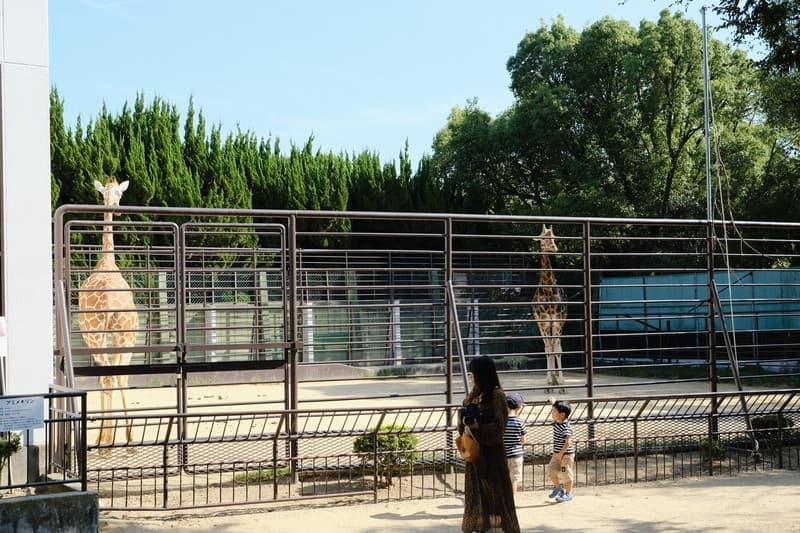 姫路市立動物園 きりん
