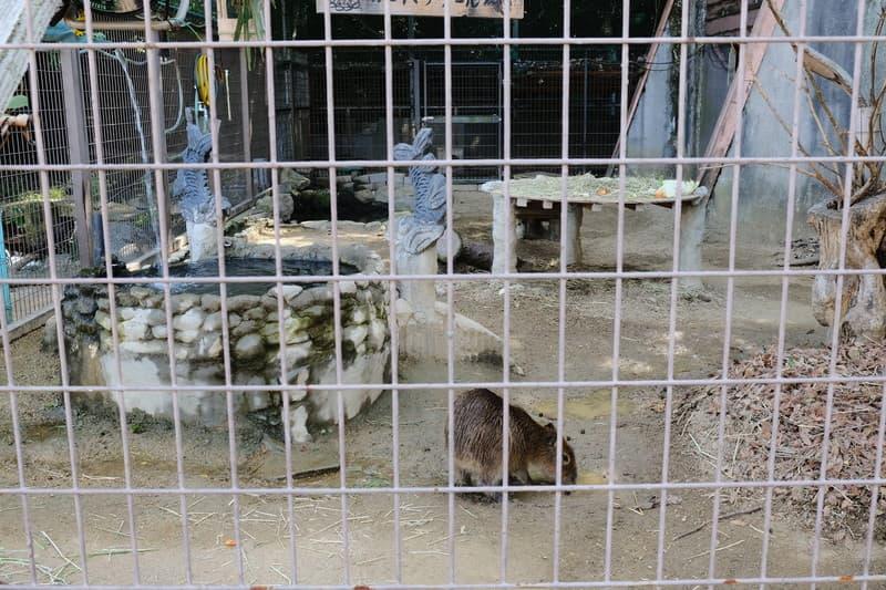 姫路市立動物園 子カピバラ